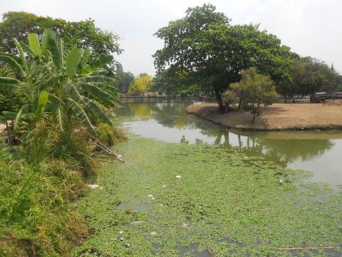 moustiques-thailande
