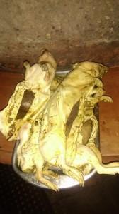 cochon dinde14