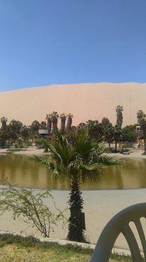 oasis4